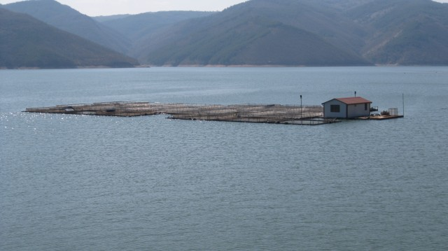 Sturgeon farm in Bulgaria